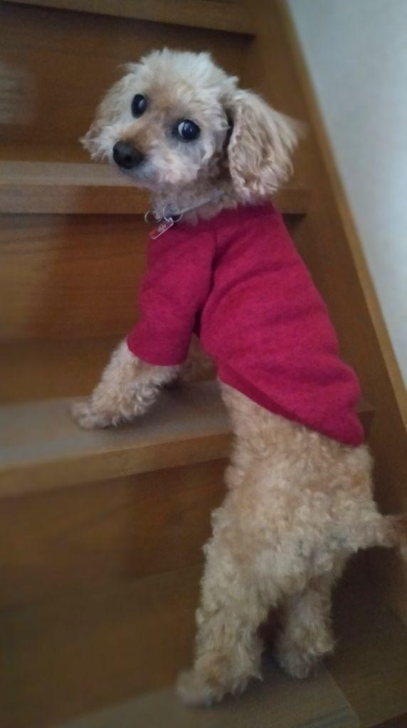 階段に滑り止めシートをしいて老犬が上りやすくなった 岡崎市の琴教室 三味線教 安城市 豊田市 知立市 刈谷市より便利